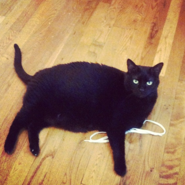 cisco cat