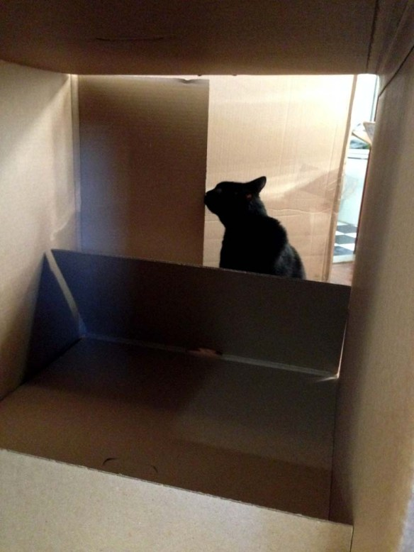 #fatcat among the boxes